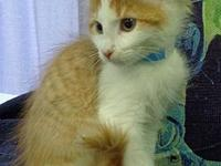 Seminole's story -- -- Kitten Division Adoption Center,