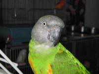 I have a 3 year old Senegal Parrot. I am moving and