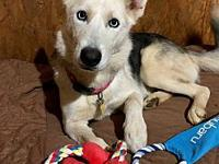 Senoa's story Senoa came to us with her two pups, Sonny
