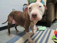 Serenity's story SERENITY SHELTER BREED: PIT MIX