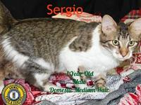 Sergio's story You can fill out an adoption application