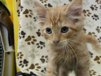 Serj's story Hello! I'm a very sweet little kitten
