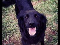 Cookie is a setter mix. She has a sweet personality and