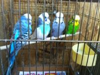 Selling all my cages, devices and birds. All birds are