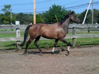 We have several horses for lease $150 and up per month,