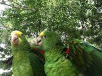 Great Lakes Parrot Place has a Severe Macaw, weaned and