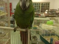 Lou our sweet mini macaw is looking for his forever