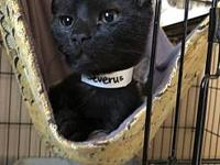 Severus's story Stray Haven Humane Society & SPCA,