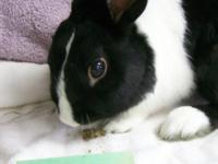 Seymour is one of six bunnies left behind in a home