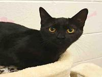 SHADOW's story This animal was surrendered to the
