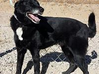 Shadow's story Shadow, Border Collie mix, 8 yrs, 60