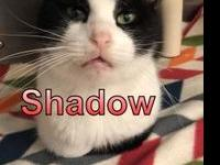 Shadow's story My name is Shadow and I am a very timid