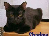 Shadow's story Meet Shadow, This boy needs a home that