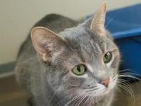 Shadow's story Meet Shadow, a sweet 8-year-old grey and