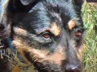 Shadow believed he lived in a loving forever home,