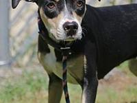 My story Hi, I'm Shadow! I came into the shelter with