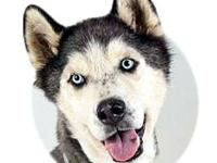 My story Shadow's adoption includes his: neuter,