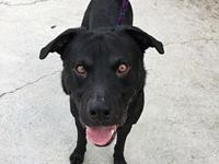 My story Hi, my name is Shadow! I love to play fetch