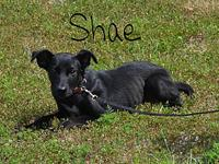 Shae's story Shae is a sweet little girl looking for