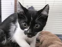 My story I came to Cat Depot with my siblings Scully,