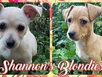 Shannon's Blondies's story SHANNONS BLONDIES: How