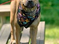Shar Pei - Henry - Medium - Young - Male - Dog Henry is