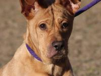 Shar Pei - Tommy - Large - Young - Male - Dog Don't let