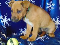 Sharkey is a male Shepherd mix. DOB:  1/1/2018; Weight