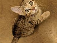 Shasta's story Look at this beautiful kitten! Meet