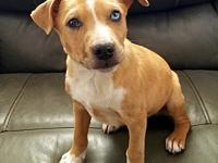 Shawn's story Shawn is a 9 week old Catahoula/Lab mix!