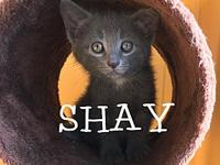 Shay's story Shay is a 12 week old adorable female