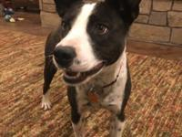 Shayna is an extremely sweet Border Collie mix