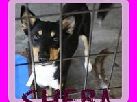 SHEBA-1's story Please contact Jenny Cope