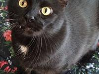 Sheba's story All of our cats and kittens are spayed or