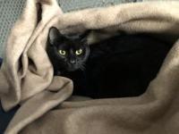 Sheba's story Meet Sheba. This little princess enjoys