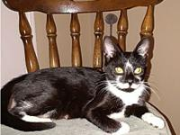 My story Sheba is a beautiful and friendly tuxedo girl