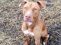 Sheba's story Sheba is a 1 year old spayed female who