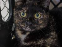 Visit Sheeba at our Adoption Center open Monday through