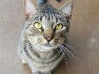 Sheeba's story - Sheeba is a sweet little guy that
