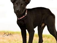 Sheeba's story Sheeba who we call Sis is a black lab