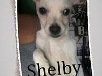 Shelby's story Please contact Lupe