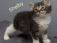 Shelby's story You can fill out an adoption application