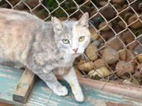 Shelby's story - Shelby is a real pretty kitty that