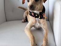 Sheldon's story Meet Sheldon! This young terrier blend