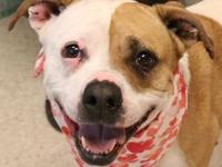 Shella's story Shella is a happy gal! She bounds out of