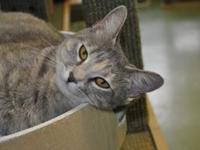 Shelly's story Hi, my name is Shelly the sweet! I love