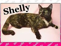 Shelly's story Shelly is a gorgeous torteshell hoping