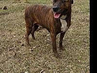 Shelly - N's story Shelly is a mixed breed adult dog in