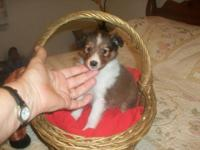 taking deposit on Tobey, who weighs 2lbs ... he is a