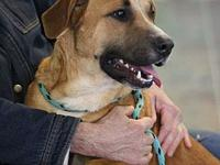 SHEMP's story MEET SHEMP! A 1-2 year old, male,